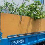 剪定枝の回収処分