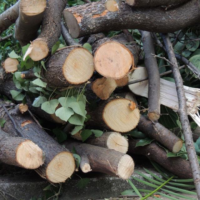 生木・剪定枝の回収