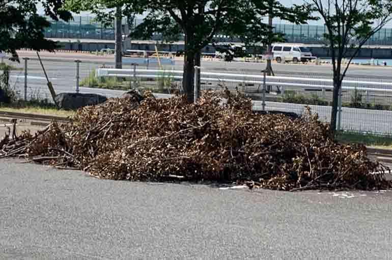 駐車場に集められた剪定枝