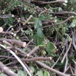 剪定後の枝木